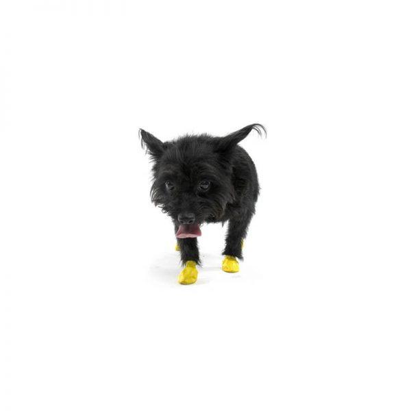 bottines-protection-pour-chiens XXS