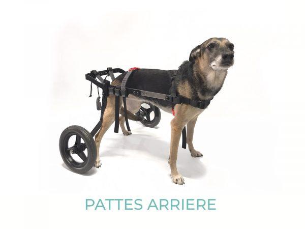 EVASION-MEDIUM-2020 - 1 - orthopédie canine