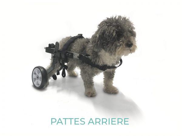 evasion-mini-2020 - orthopedie canine