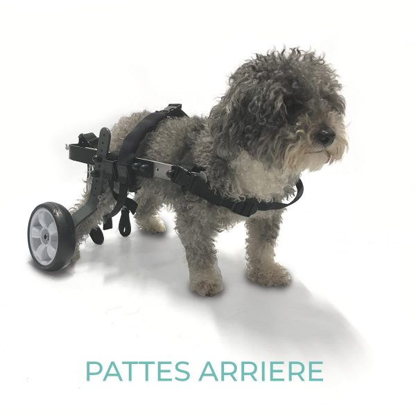 evasion-mini-2020 - orthopedie canine