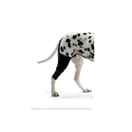 genouillere-chien