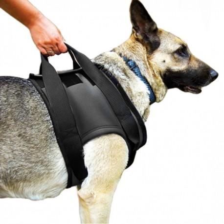 harnais-avant-rehabilitation-pour-chiens
