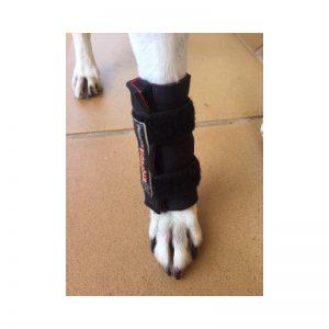 soutien-du-carpe-pour-chien 3