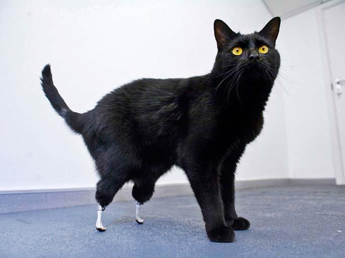 chat avec protheses