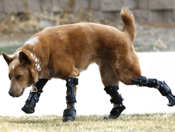chien-bionic-nakio