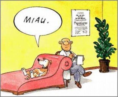 psychologue-pour-chien