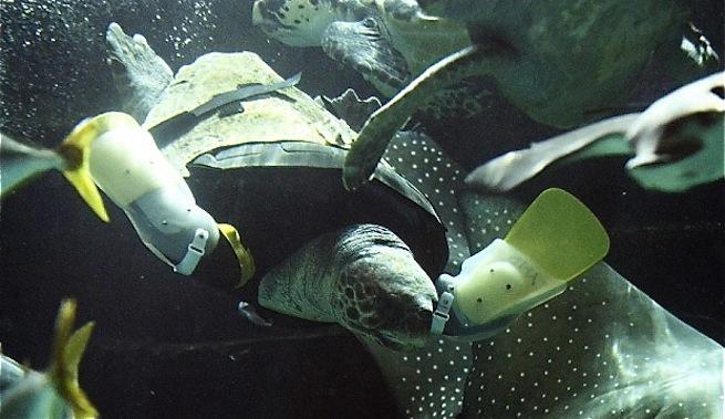 tortue-pattes-artificieles