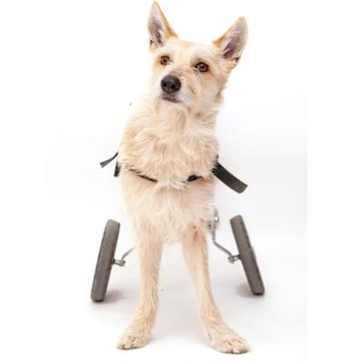 chariot chien handicapé vue de face