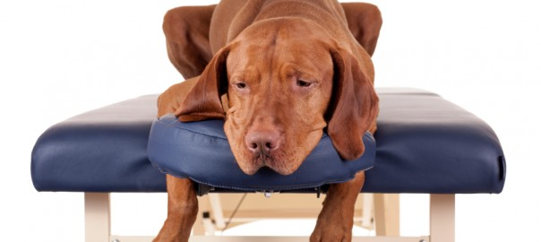 massage pour chiens