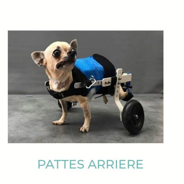 chariot-roulant-pour-chien-handicape-chien-de-moins-de-3-kg
