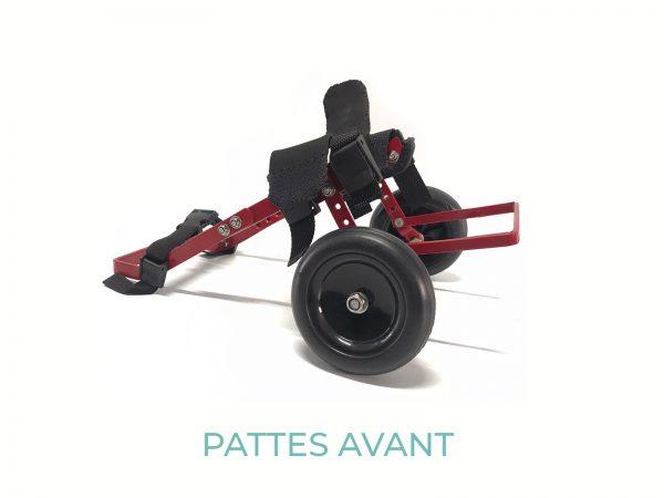 evasion-dog-tiny-pattes-avant-1
