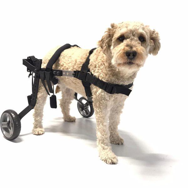 evasion-dog small 2020 - pepa