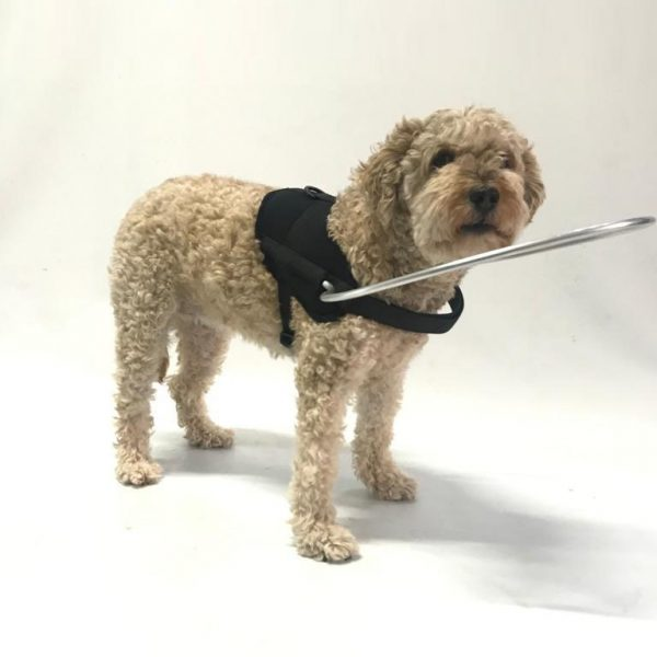 HARNAIS CHIEN AVEUGLE - 1 - ORTHOPEDIE CANINE