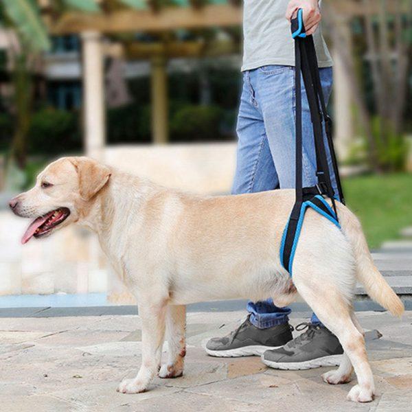 Harnais de levage pour chien - Orthopédie canine - 2