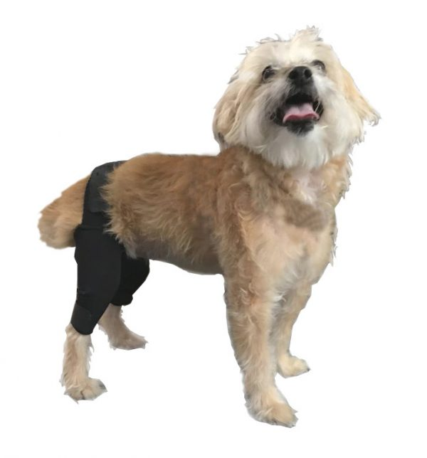 genouillere double pour chien - orthopédie canine
