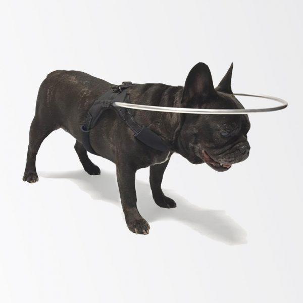 harnais pour chien aveugle - 2020