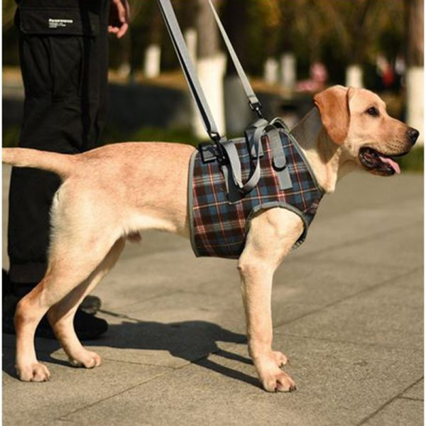 harnais pour chien - pattes avant - 2