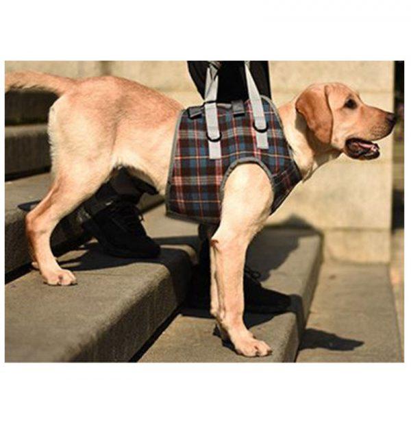 harnais pour chien - pattes avant - 4