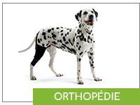 orthopédie canine