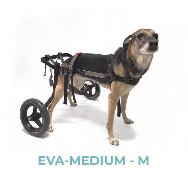 EVA-MEDIUM-M