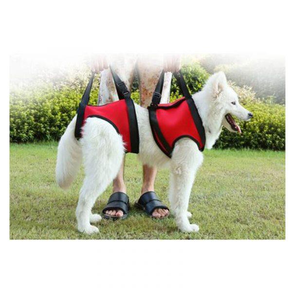 harnais pour chien avant et arrière - 0